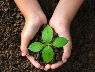 Cara Merawat Tanaman yang Efektif Agar Tumbuh Subur