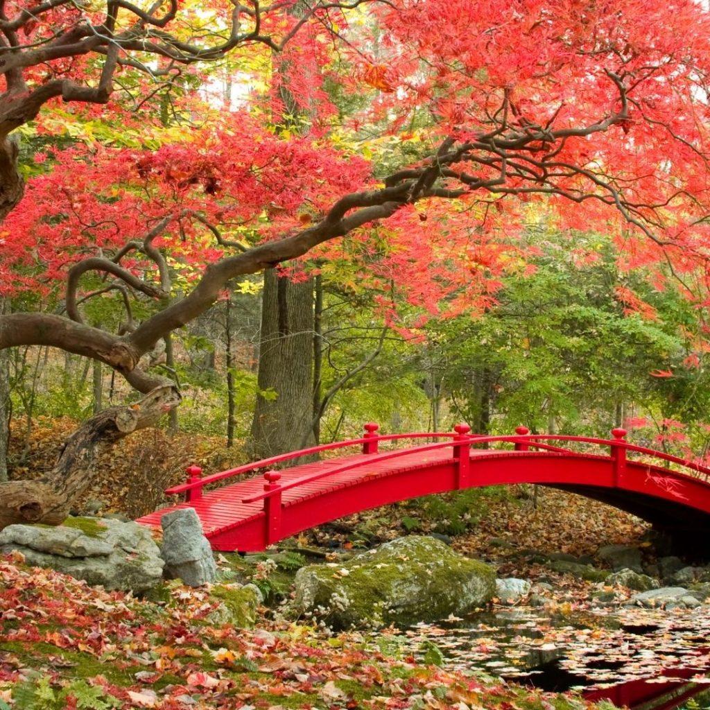 Inspirasi Taman Rumah