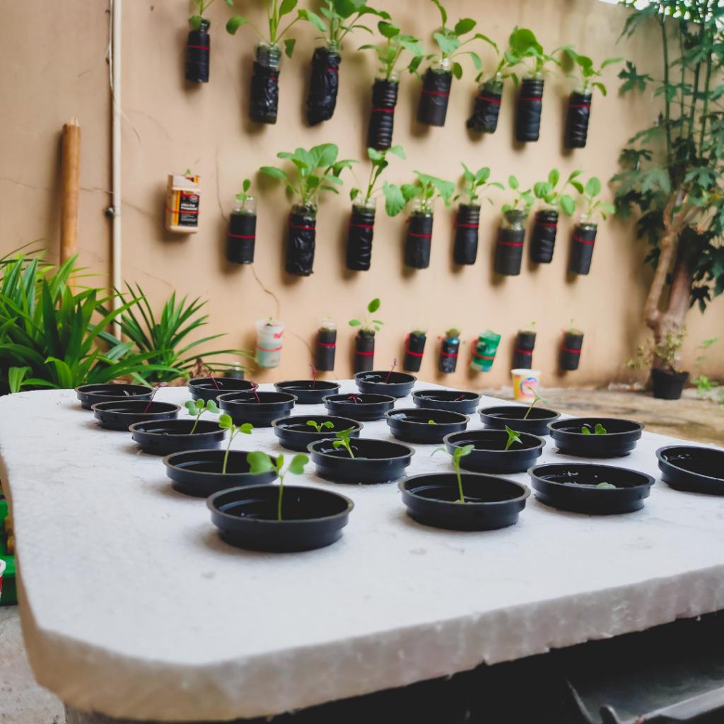 Ide Kreatif Taman Minimalis pada Lahan Sempit