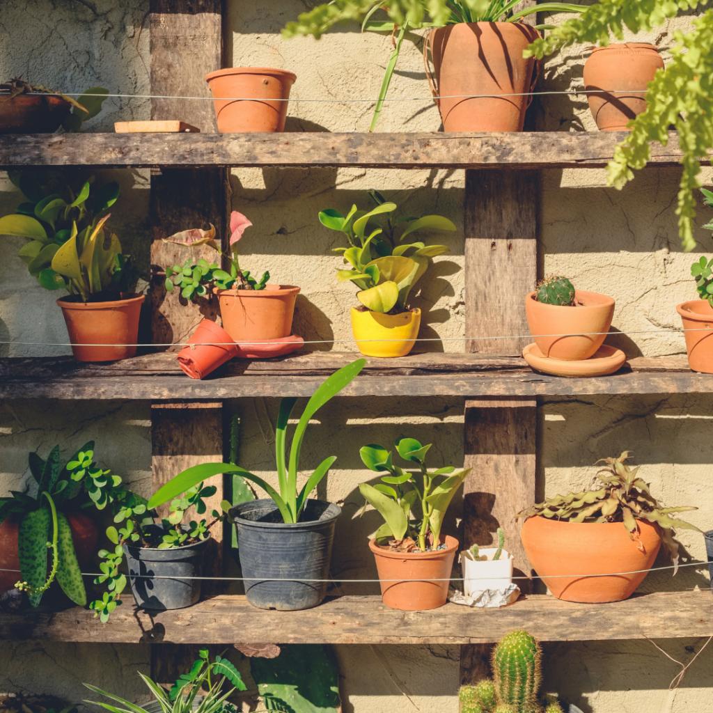 Tips Menghijaukan Halaman Depan Rumah Yang Terbatas